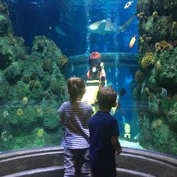 Legoland Billund Sealife
