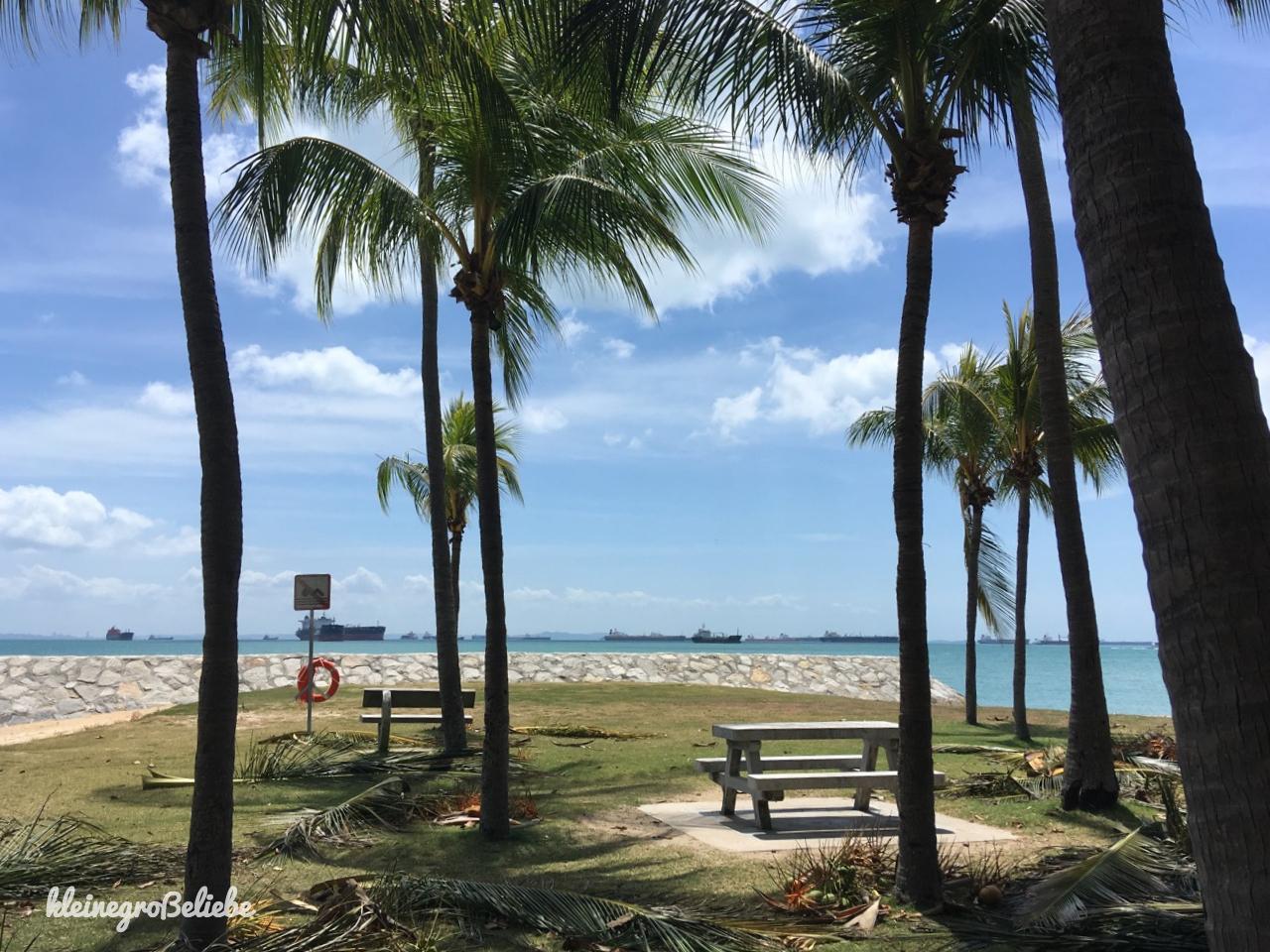 Singapur - East Coast Park Palme